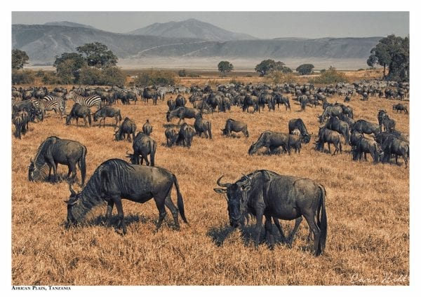 Artistic colour photo print of an African plain filled with wildebeest in Serengeti, Tanzania.