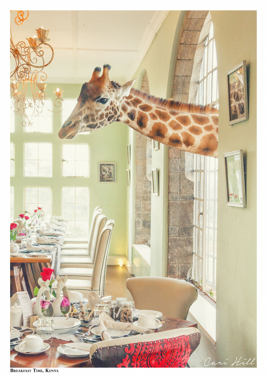 Artistic colour photo print of a giraffe poking its head through the window during breakfast time at Giraffe Manor, Nairobi, Kenya.