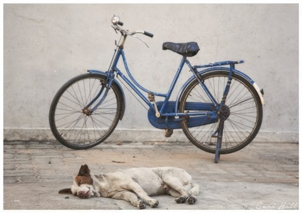 Artistic colour photo print of a sleeping dog and bike in Pondicherry, India.