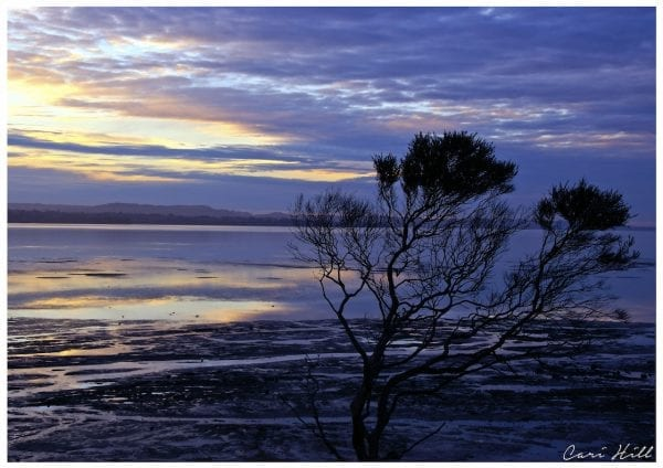 Artistic colour photo print of a tree silhouette at dusk in Clarks Beach, New Zealand.