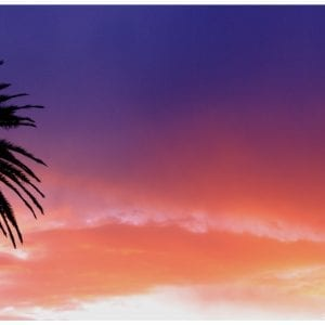 Artistic colour photo print of a palm tree silhouette at dusk in Auckland, New Zealand.