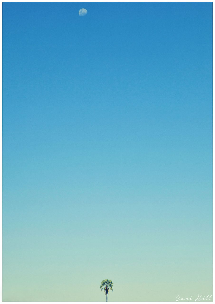 Artistic colour photo print of a palm tree and the moon against a vast blue sky in Botswana.