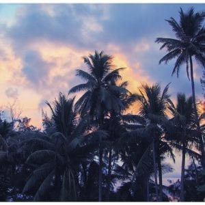 Artistic colour photo print of silhouettes of palm trees at dusk in Maui, Hawaii.