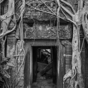 Artistic B&W photo print of an ancient passageway covered in tree vines.
