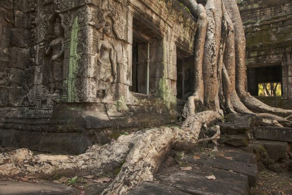 Artistic colour photo print of tree roots in Angkor Wat, Siem Riep, Cambodia.