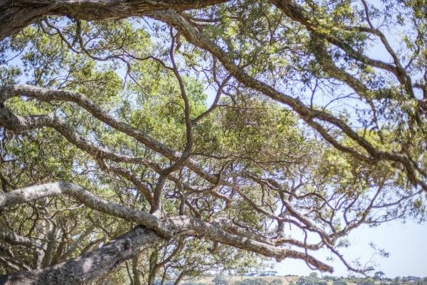 Trees, Awhitu National Park