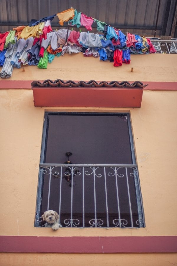 Artistic colour photo of a dog poking his head out of a window with colourful washing framing the window in Guayaquil, Ecuador.